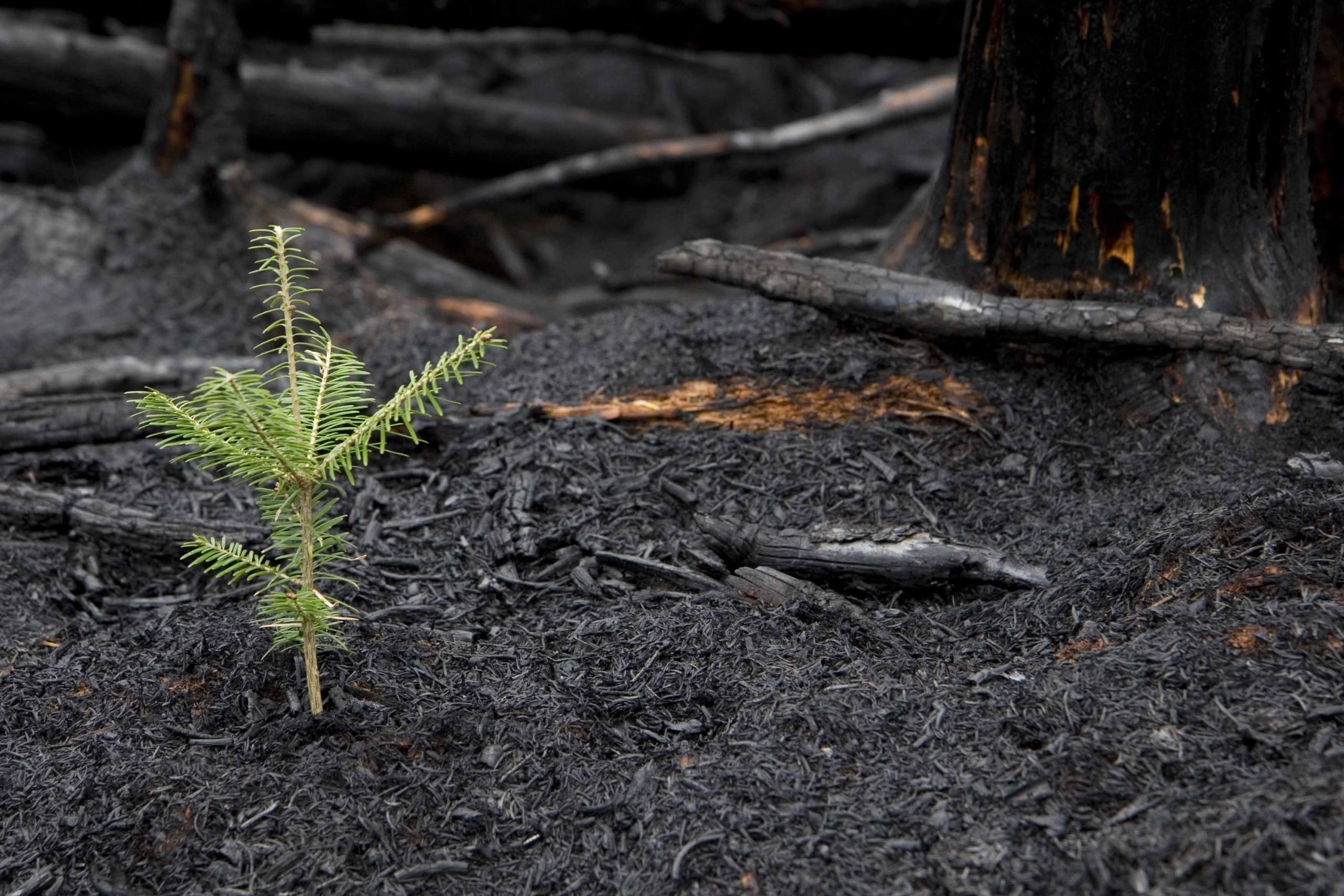 United for BC Wildfire Recovery Fund